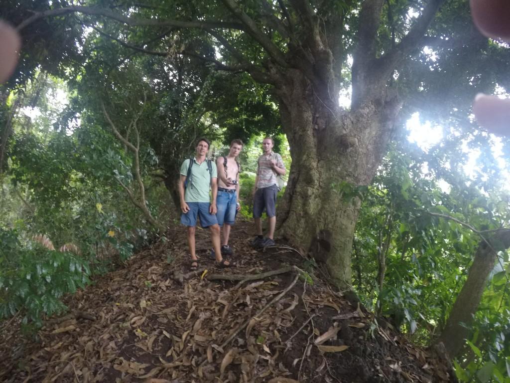 Dschungelwanderung auf den Bergkämmen