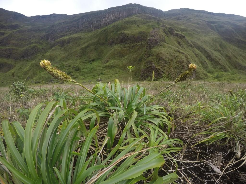 Blume im Krater
