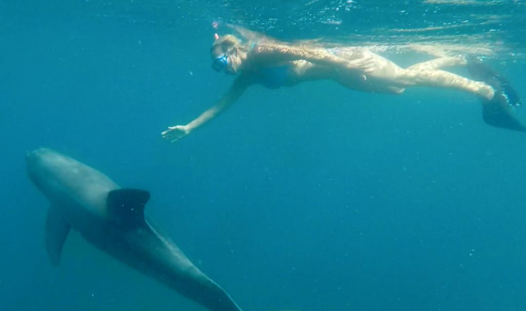 Delfin und Carola