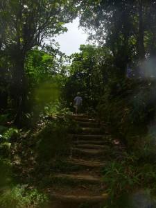 gepflegte Holzstufen durch den Regenwald